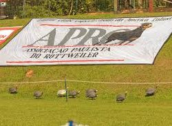 Resultados da 160ª Exposição especializada da raça Rottweiler