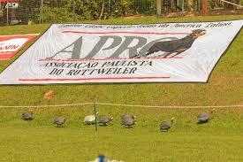 Resultados da 157ª Exposição especializada da raça Rottweiler